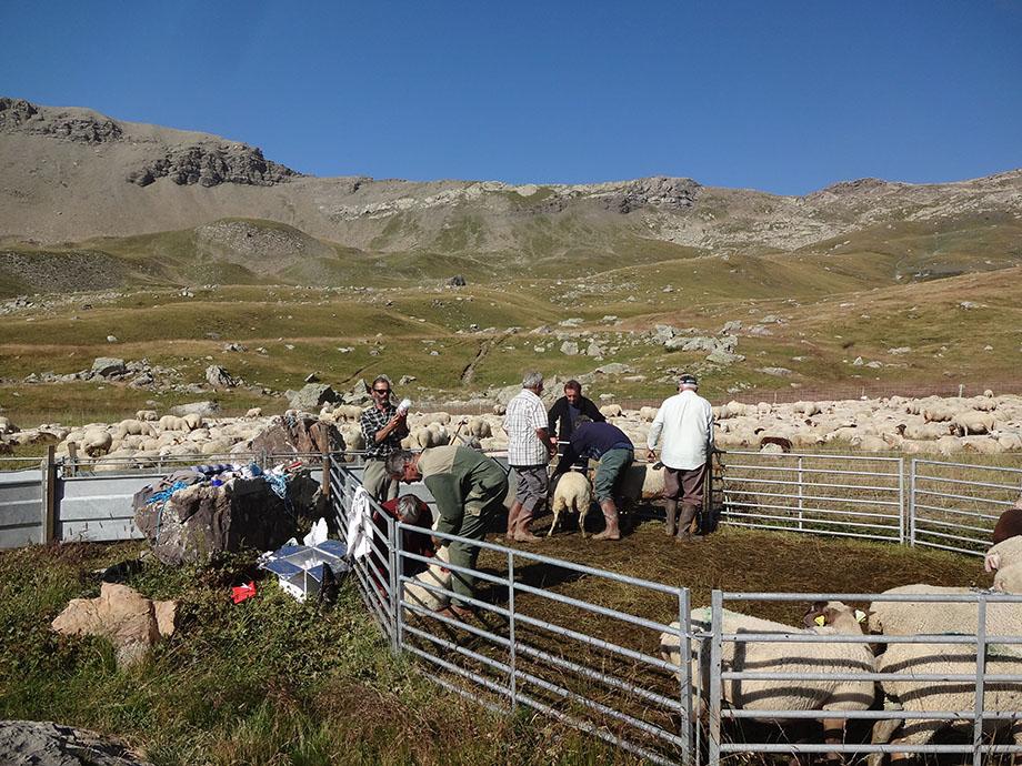 Août 2015 : Pascal et les éleveurs aux soins à l'Alp