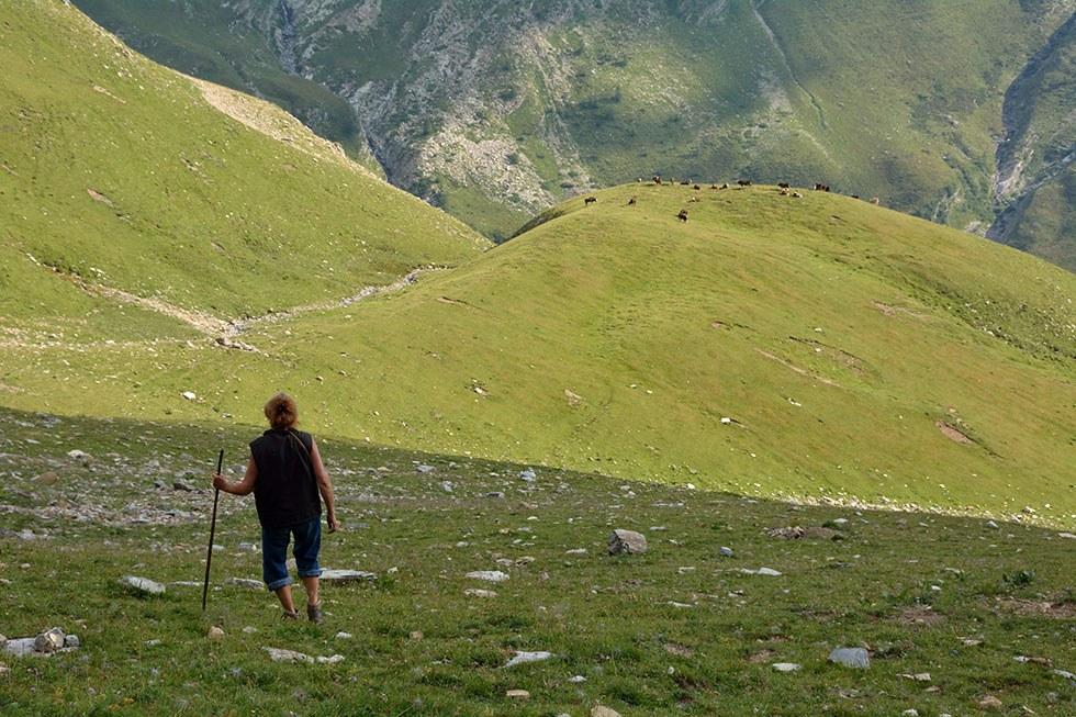 pastoralisme la bergère (Michèle Hagard) à Chargès Réallon