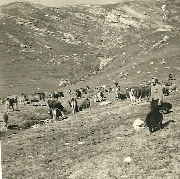 Germainejuillet1962 (2)