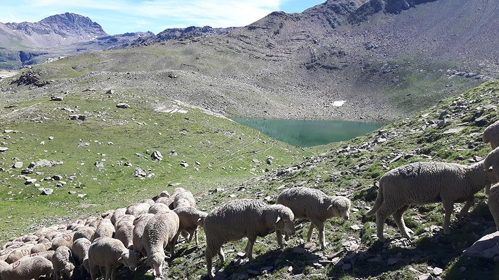a-marie-catherine-boaglio-lac-de-palluel-2