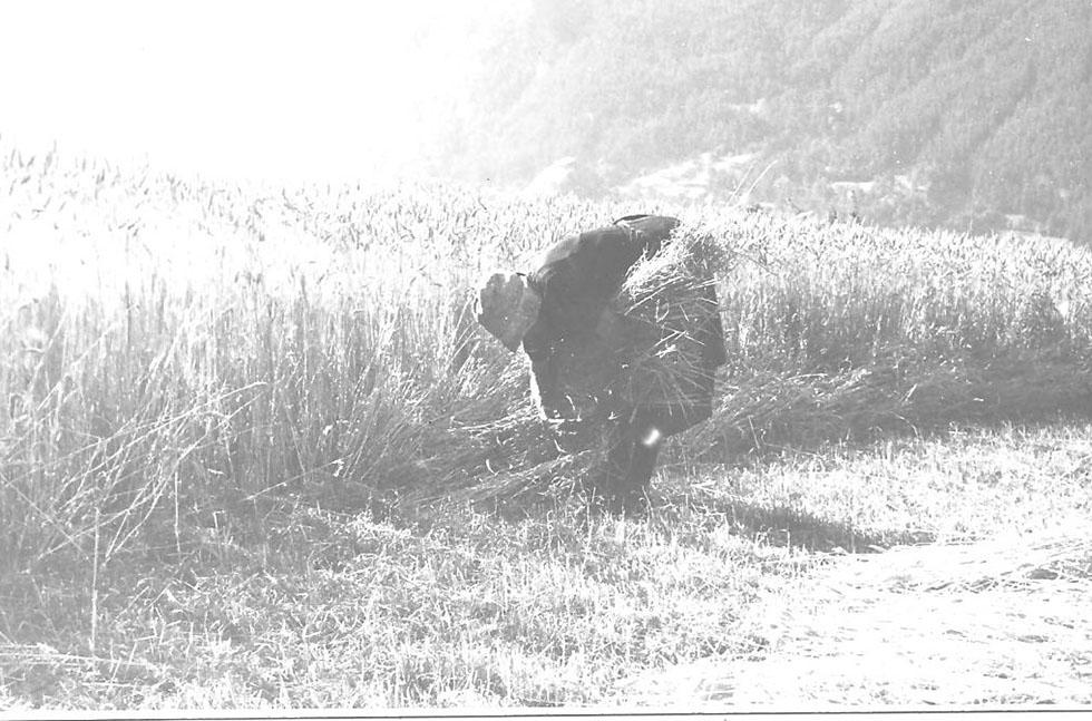 La grand mère Muraille aux champs. Après la guerre rien ne change.