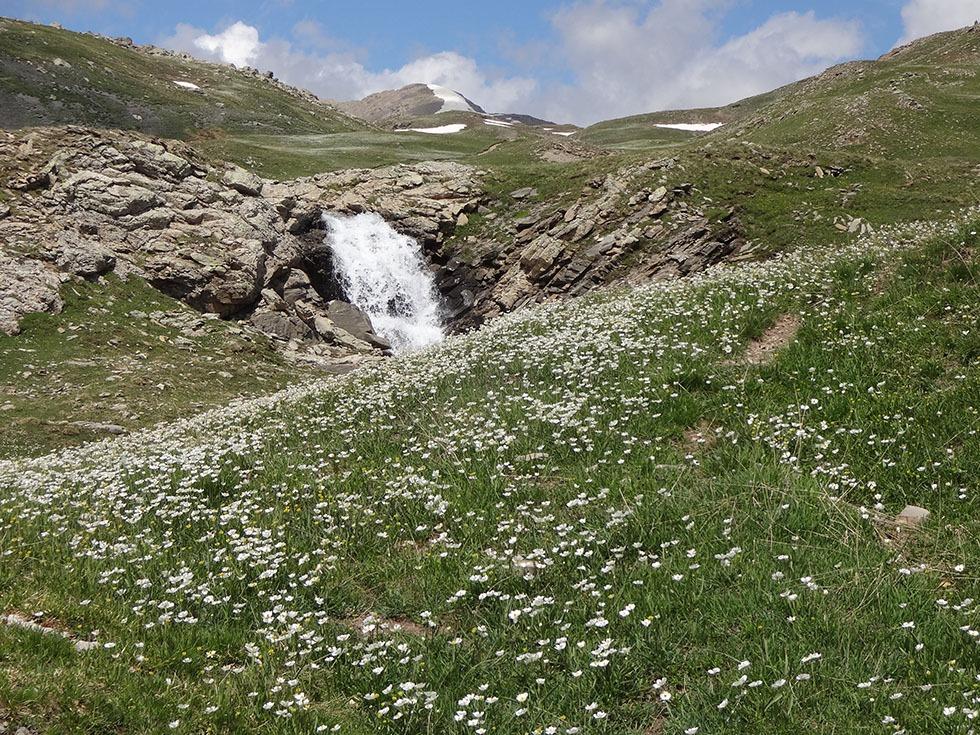 Le printemps sur l'Alp