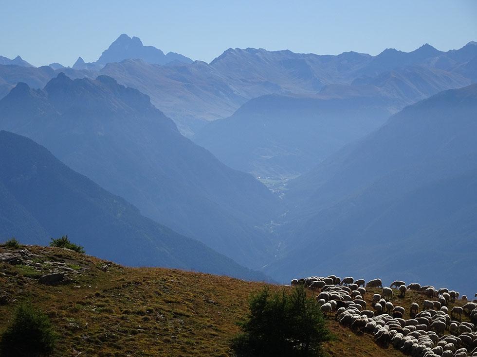 Les quartiers d'août à l'Alp. Le Paradis.