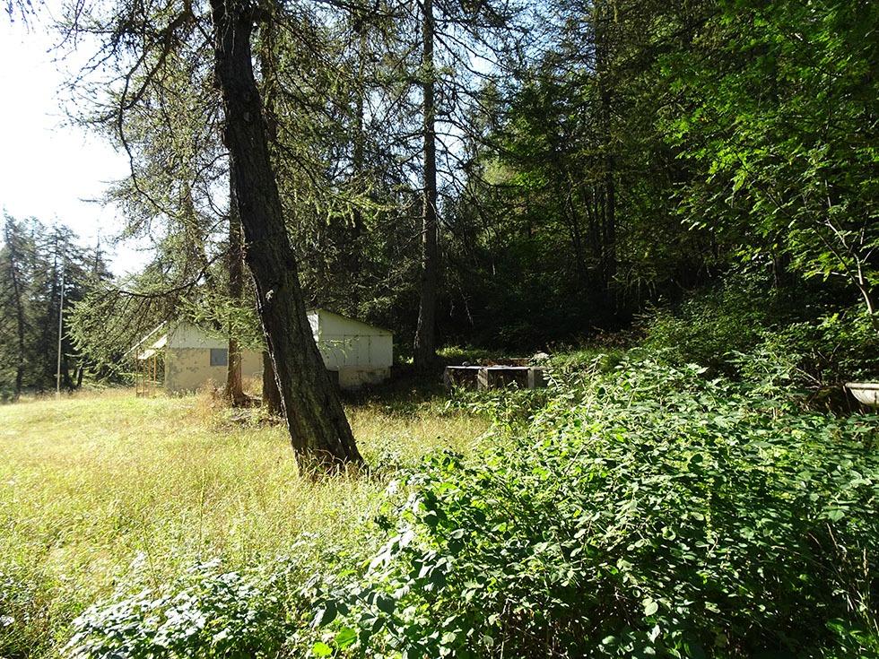 Ce qui reste des installations du Camp de la Marine, souvent vandalisées, envahies par la végétation.