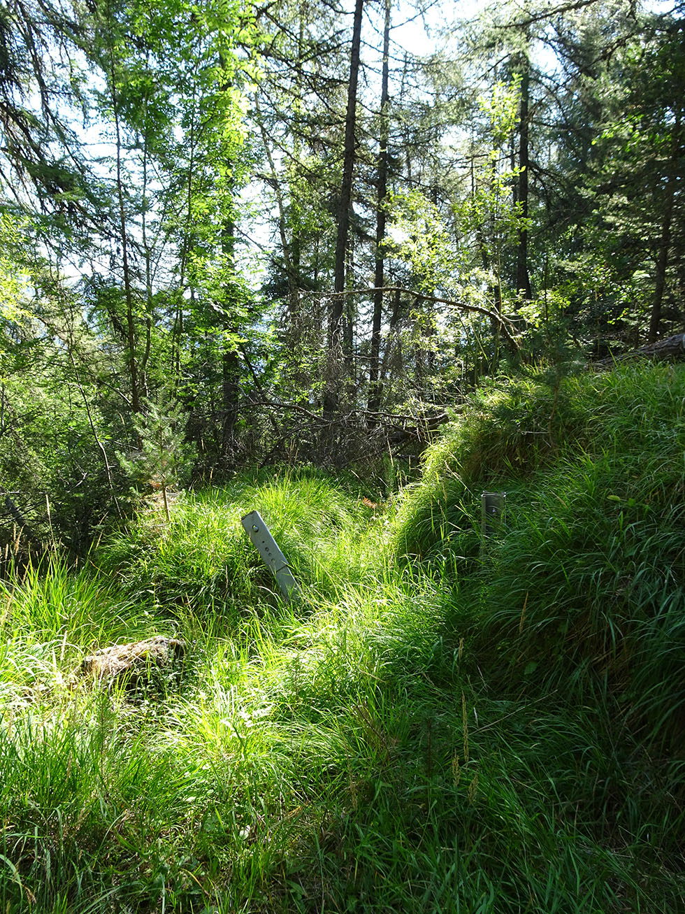 Le tronçon primitif du canal de Beauregard se perd désormais dans une véritable jungle.