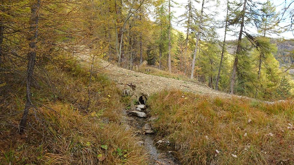 Dernière piste de tirage de bois à Manouel passant sur le canal par une simple buse ciment recouverte de terre.